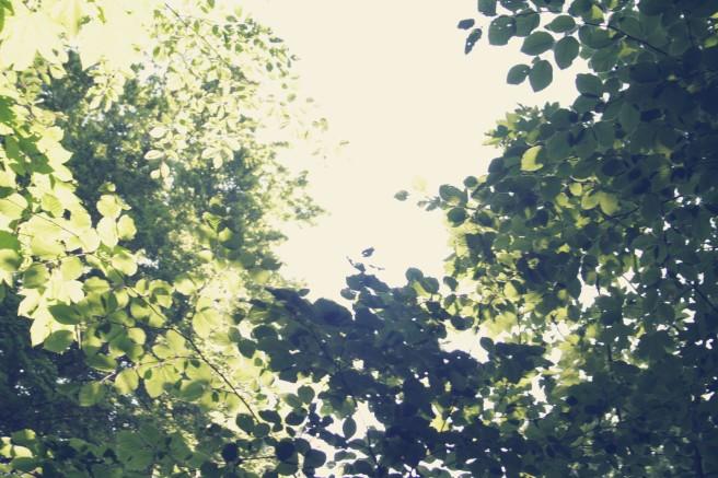 bokskogen malmö